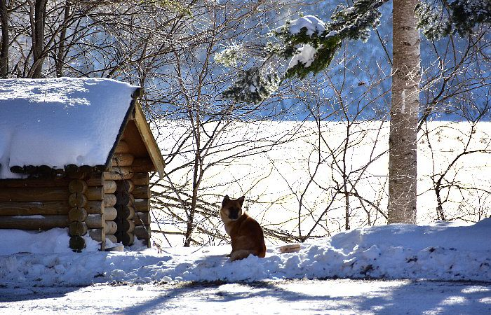 冬のチミケップホテル