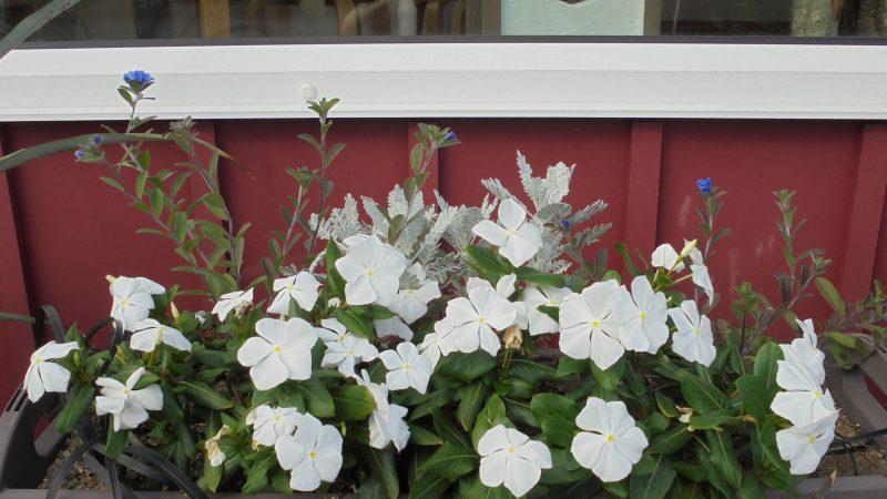 2018 夏の花壇