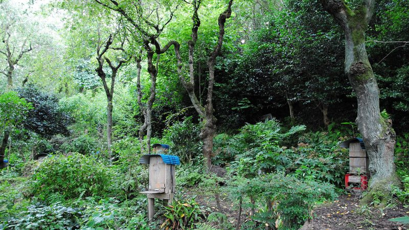 住文舎のワックスは仙台の日本ミツバチから。